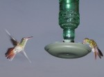 Humming birds in action
